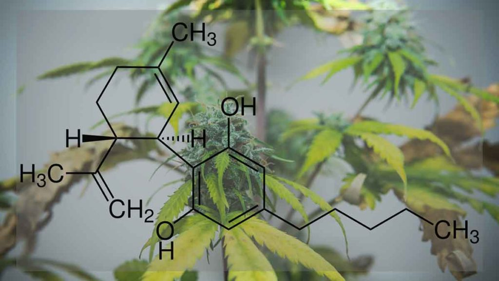 cbd formula over cannabis hemp plant